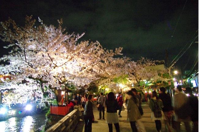 2010sakura146