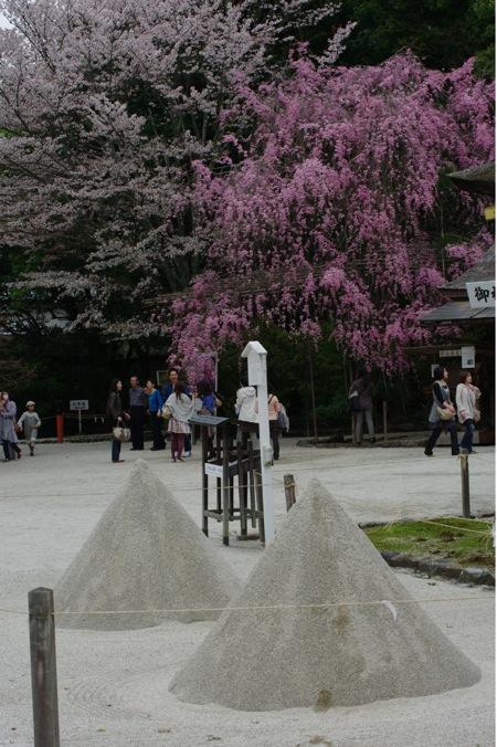 2010sakura148