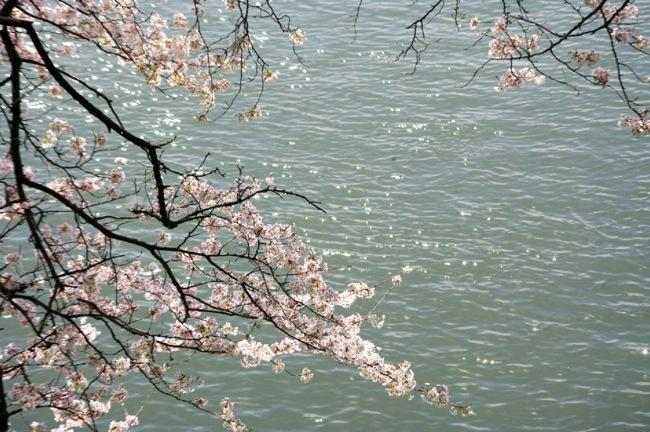 '10桜15
