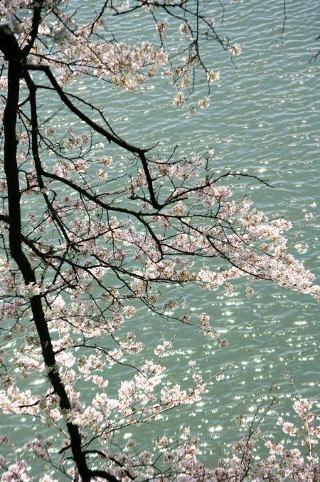 '10桜16