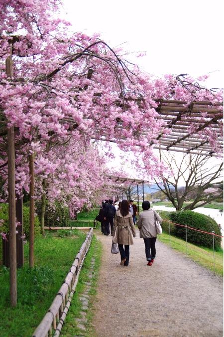 2010sakura160