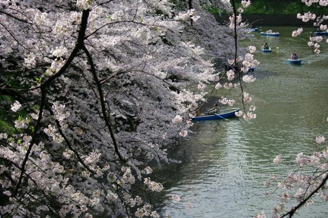 '10桜19