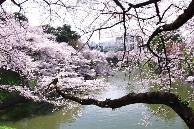 '10桜21