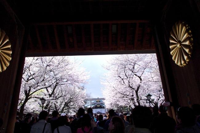 '10桜24