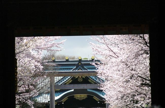 '10桜25