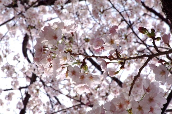 '10桜27