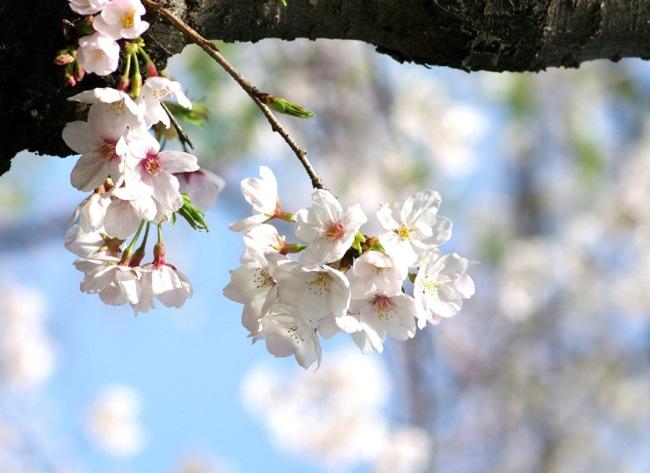 '10桜28