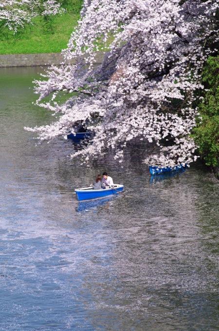 '10桜31