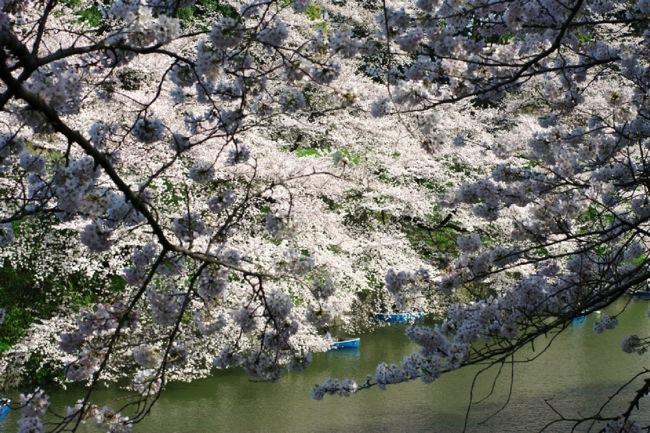 '10桜32