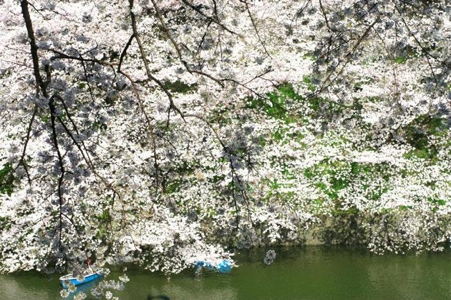 '10桜34