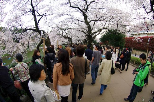 '10桜35