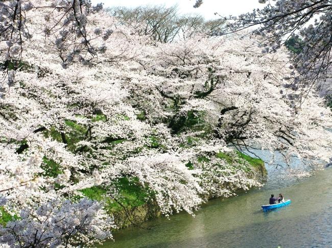 '10桜36