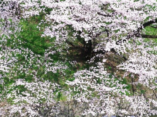 '10桜38