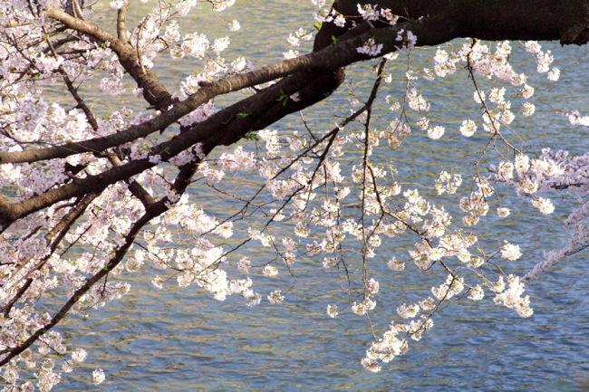 '10桜43