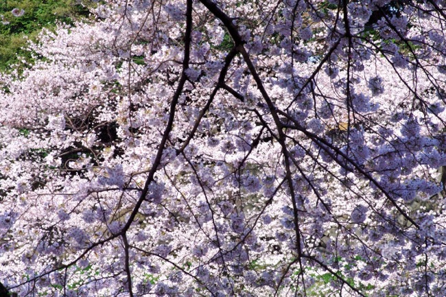 '10桜45