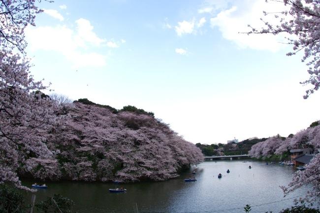 '10桜50