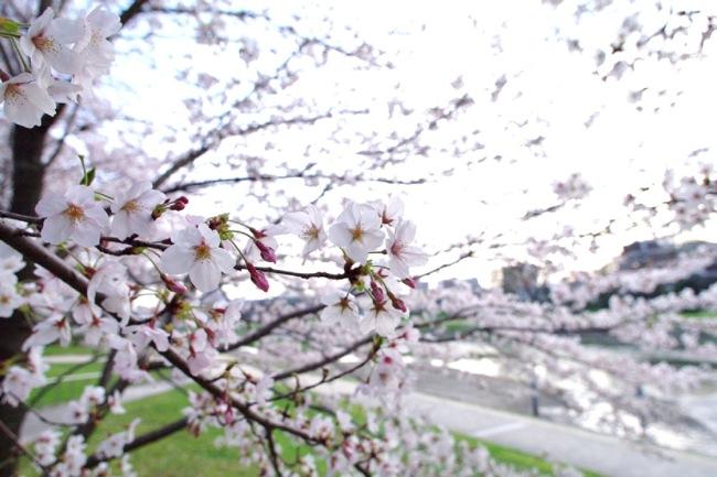 '10桜53