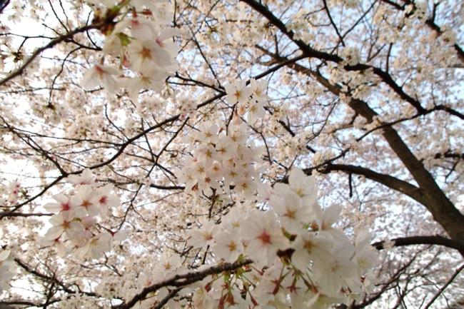 '10桜57