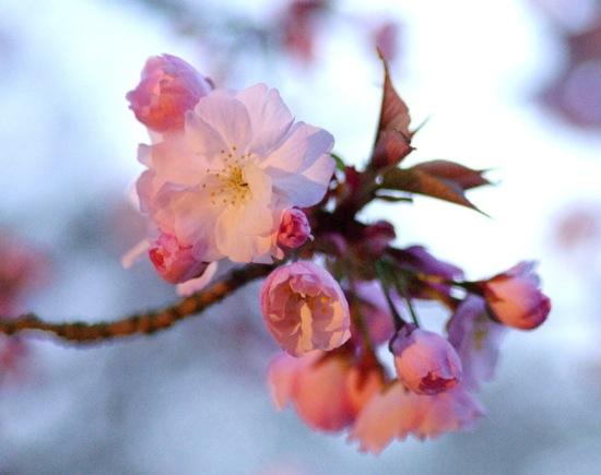 '10桜62