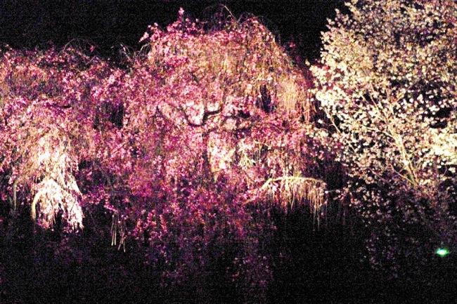 '10桜70