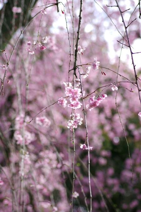'10桜72