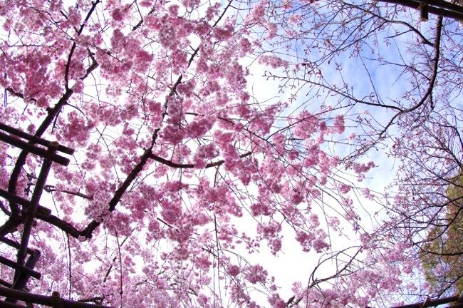 '10桜73