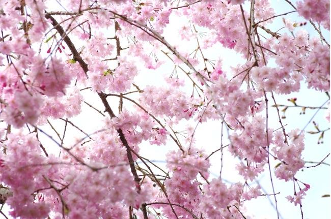 '10桜78