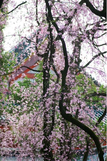 '10桜79