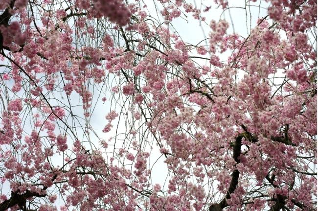 '10桜82