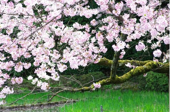 '10桜85