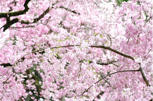 '10桜86