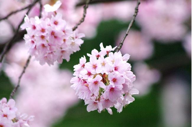 '10桜88