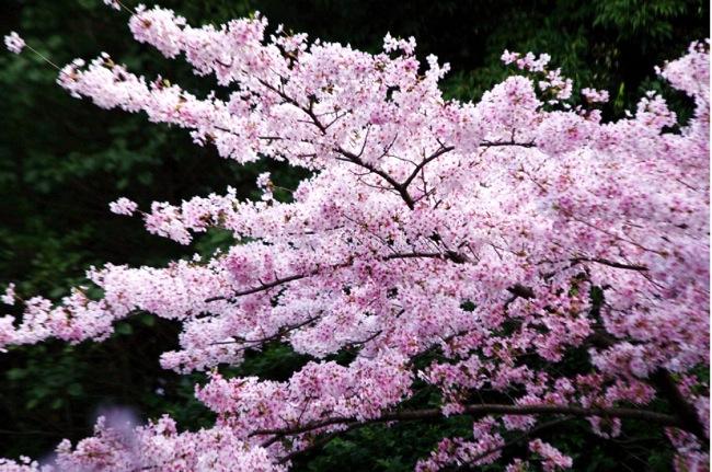 '10桜89