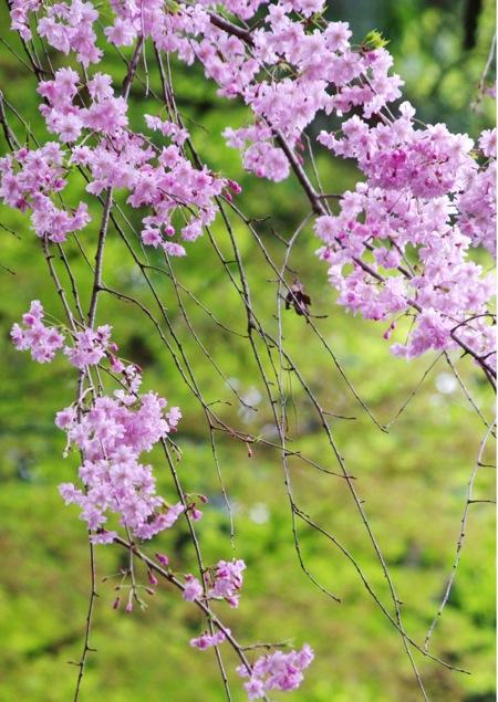 '10桜90