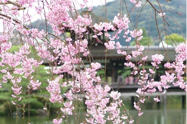'10桜93