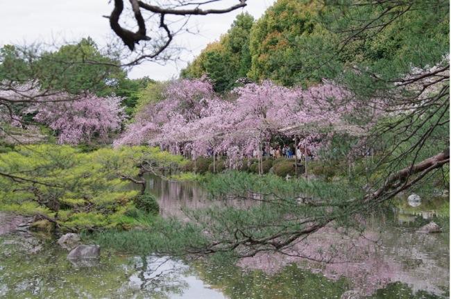 '10桜96