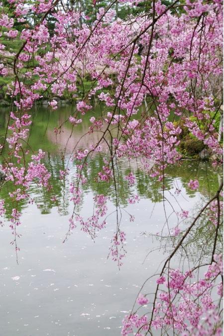 '10桜99