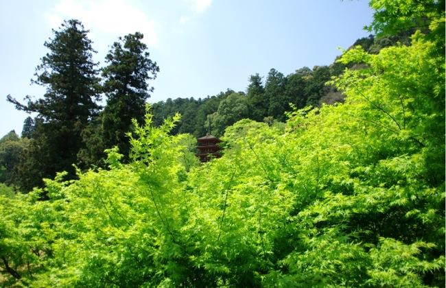 京都奈良真春104
