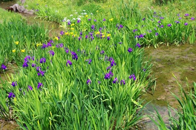 京都奈良真春19