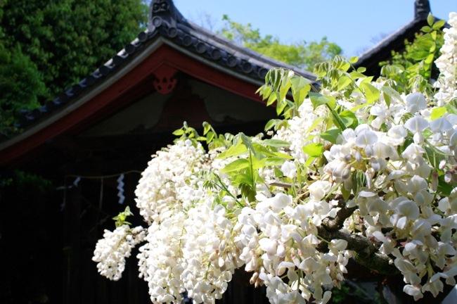 京都奈良真春32
