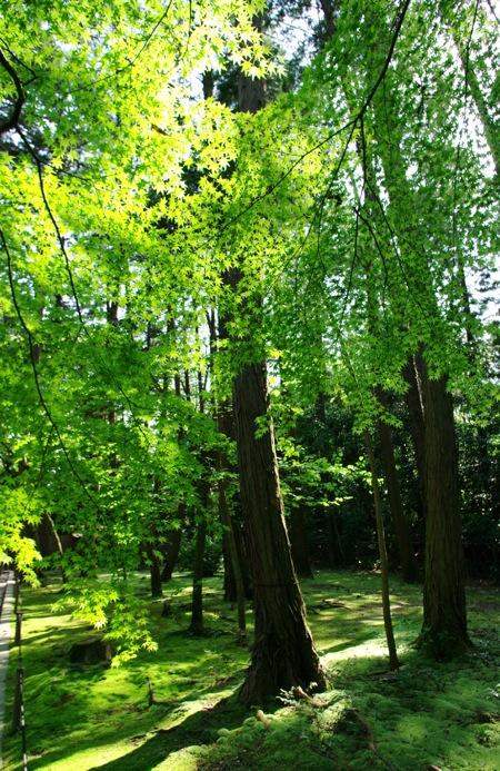 京都奈良真春46