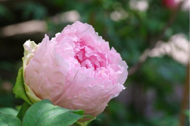 京都奈良真春86