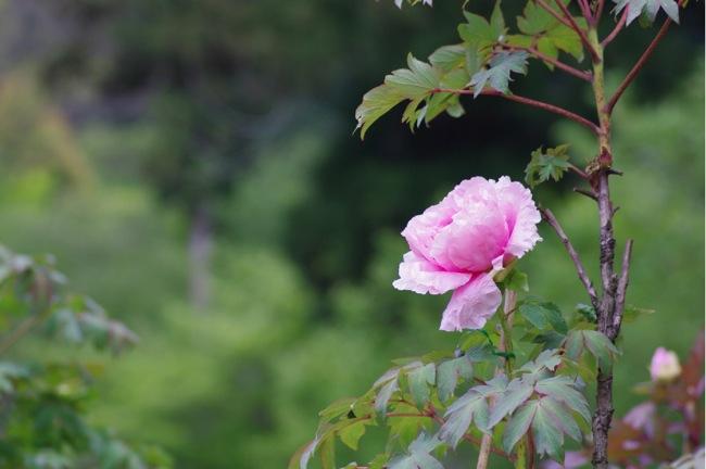 京都奈良真春89