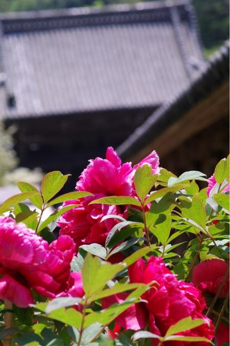 京都奈良真春98