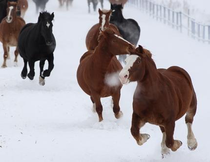 horse2100