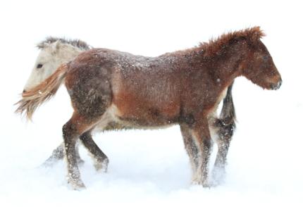 horse2102