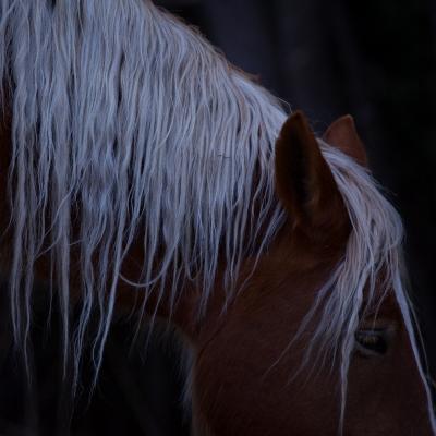 horse5000