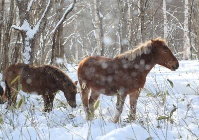 horse5001