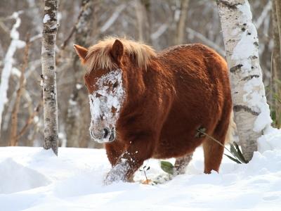 horse5002