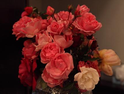 rose2003